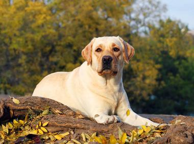 собака 9