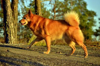 12 Астрологический прогноз на 2018 год Жёлтой Земляной Собаки