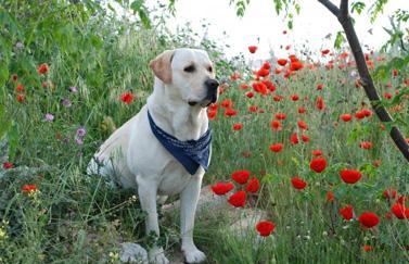 3 Астрологический прогноз на 2018 год Жёлтой Земляной Собаки