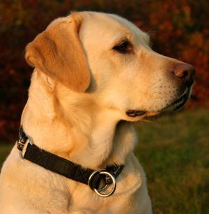 4 Астрологический прогноз на 2018 год Жёлтой Земляной Собаки
